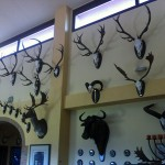 Salón de trofeos